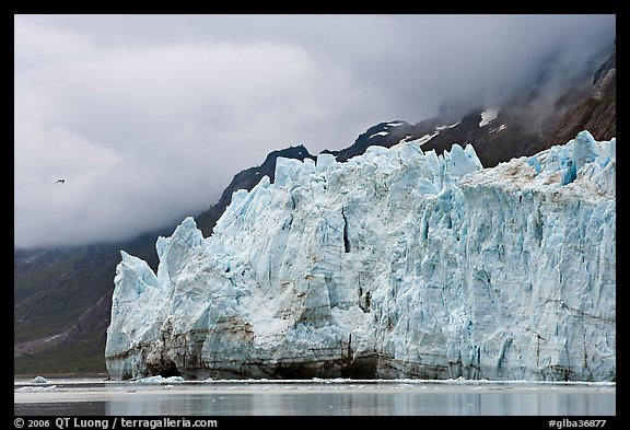 Terminus face of Margerie Glacier. Glacier Bay National Park (color)