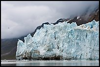 Terminus face of Margerie Glacier. Glacier Bay National Park, Alaska, USA. (color)