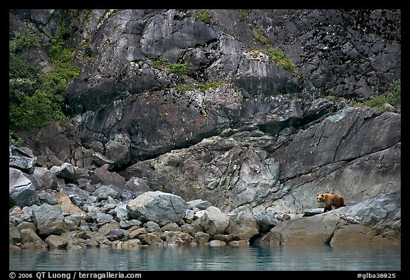 Grizzly bear on rocks by the water. Glacier Bay National Park (color)