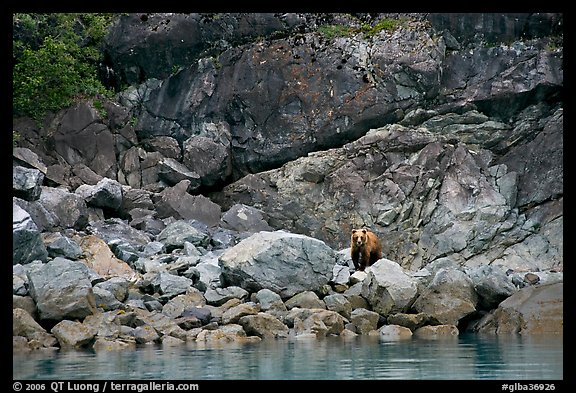 Grizzly bear and boulders by the water. Glacier Bay National Park (color)