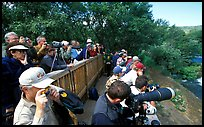 Photographers at the Brooks falls obervation platform. Katmai National Park, Alaska, USA. (color)