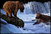 Brown bears fishing at the Brooks falls. Katmai National Park, Alaska, USA. (color)