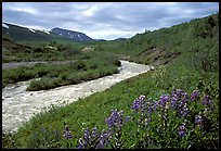 Wildflowers and Lethe river at the edge of the Valley of Ten Thousand smokes. Katmai National Park, Alaska, USA.