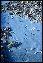 Close-up of animal tracks in fine ash, Valley of Ten Thousand smokes. Katmai National Park ( color)