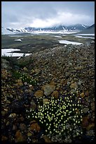 Pumice and wildflowers, Valley of Ten Thousand smokes. Katmai National Park ( color)