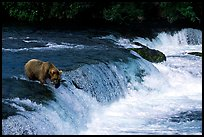Overview of Brooks falls. Katmai National Park ( color)