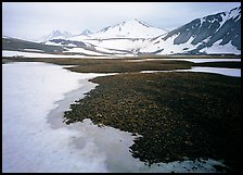 Melting snow and lichens, Valley of Ten Thousand smokes. Katmai National Park ( color)
