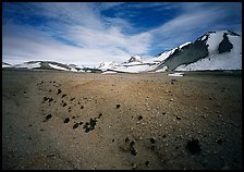 Rare plants growing out of the ash of Valley of Ten Thousand smokes. Katmai National Park, Alaska, USA.