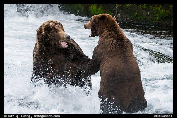 Np Image.katm63801 on Brown Bear