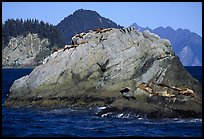 Rock with sea lions in Aialik Bay. Kenai Fjords National Park, Alaska, USA.