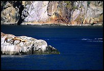 Rock with sea lions in Aialik Bay. Kenai Fjords National Park, Alaska, USA. (color)