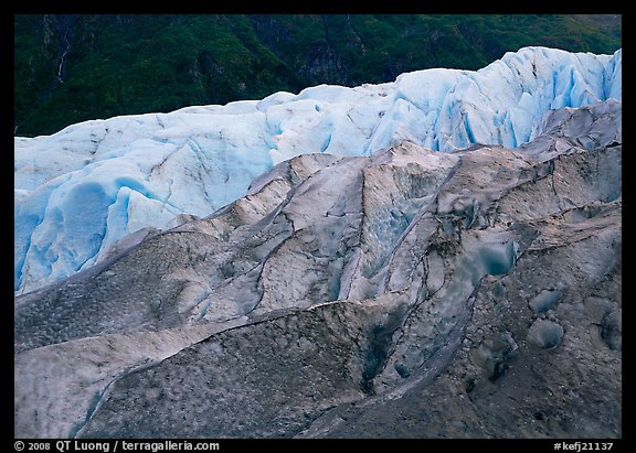 Grey ice, blue ice, Exit Glacier and forest. Kenai Fjords National Park (color)