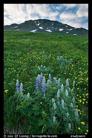 Lupine, buttercups, and rocky ridge. Kenai Fjords National Park (color)