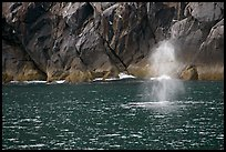 Whale spouting. Kenai Fjords National Park, Alaska, USA.