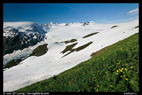 Wildflowers and Harding ice field. Kenai Fjords National Park (color)