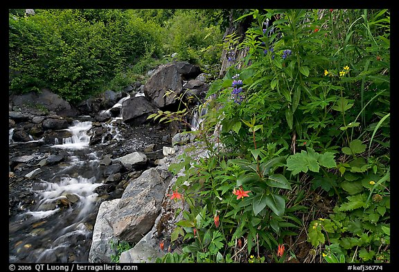 Widflowers and cascading stream. Kenai Fjords National Park, Alaska, USA.