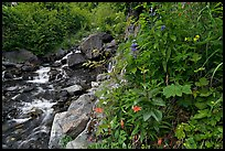 Widflowers and cascading stream. Kenai Fjords National Park, Alaska, USA. (color)