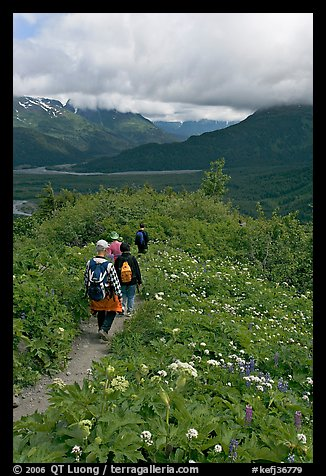 Hiking surrounded by wildflowers on Harding Icefield trail. Kenai Fjords National Park (color)