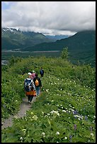 Hiking surrounded by wildflowers on Harding Icefield trail. Kenai Fjords National Park, Alaska, USA.