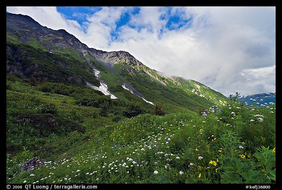Open view of verdant alpine hills, Marmot Meadows. Kenai Fjords National Park (color)