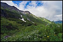Open view of verdant alpine hills, Marmot Meadows. Kenai Fjords National Park, Alaska, USA.