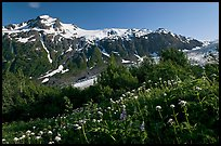 White wildflowers and peak, Marmot Meadows. Kenai Fjords National Park, Alaska, USA.
