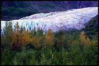 Trees and exit glacier, fall. Kenai Fjords National Park, Alaska, USA. (color)
