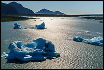 Aerial View of backlit icebergs in Bear Glacier Lagoon. Kenai Fjords National Park ( color)