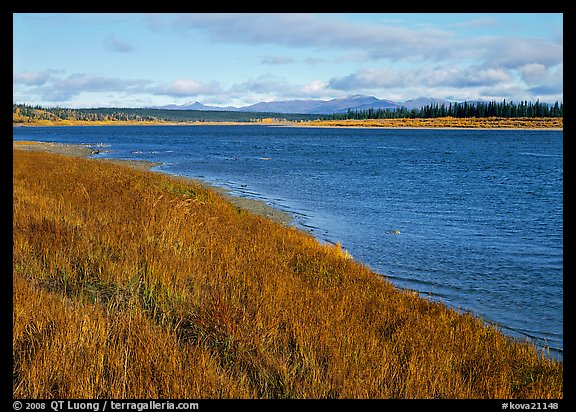 Grasses and rivershore. Kobuk Valley National Park (color)