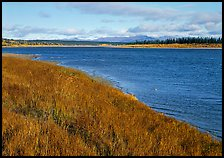 Grasses and rivershore. Kobuk Valley National Park, Alaska, USA. (color)