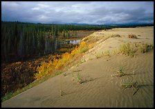 The edge of the Great Sand Dunes with boreal forest below. Kobuk Valley National Park, Alaska, USA.