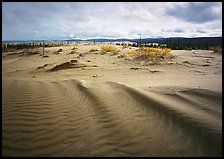 Sand ripples in Arctic dune field. Kobuk Valley National Park ( color)