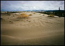 Dune field with boreal forest in the distance. Kobuk Valley National Park, Alaska, USA.