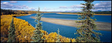 Northern river scenery seen through spruce trees. Kobuk Valley National Park (Panoramic color)