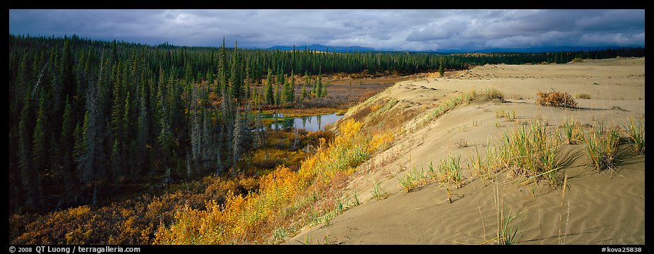 Sand dunes and boreal forest. Kobuk Valley National Park (color)