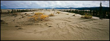 Arctic sand dune landscape. Kobuk Valley National Park (Panoramic color)