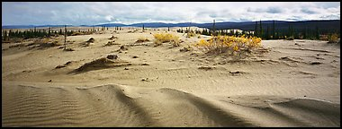 Arctic dune field. Kobuk Valley National Park (Panoramic color)