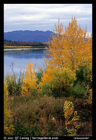 Kobuk River, Warring Mountains, and autumn colors, Onion Portage. Kobuk Valley National Park (color)