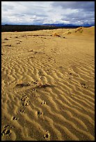 Caribou tracks and ripples in the Great Sand Dunes. Kobuk Valley National Park ( color)