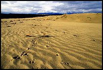 Caribou footprints and ripples in the Great Sand Dunes. Kobuk Valley National Park, Alaska, USA.