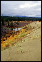 The edge of the Great Sand Dunes with the boreal taiga. Kobuk Valley National Park, Alaska, USA. (color)