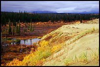 Edge of the Great Sand Dunes with tundra and taiga below. Kobuk Valley National Park, Alaska, USA. (color)
