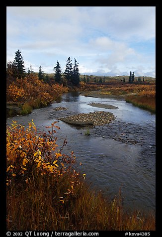 Kavet Creek and spruce trees. Kobuk Valley National Park (color)