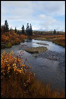Kavet Creek and spruce trees. Kobuk Valley National Park, Alaska, USA. (color)