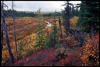 Autumn colors on boreal forest, Kavet Creek. Kobuk Valley National Park, Alaska, USA. (color)