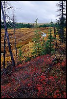 Autumn colors on Kavet Creek near the Great Sand Dunes. Kobuk Valley National Park, Alaska, USA. (color)