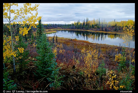 Pond near Kavet Creek. Kobuk Valley National Park (color)