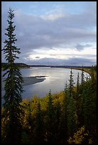 Boreal trees and bend of the Kobuk River, evening. Kobuk Valley National Park, Alaska, USA.