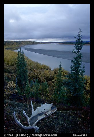 Antlers and bend of the Kobuk River, evening. Kobuk Valley National Park, Alaska, USA.
