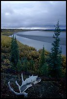 Antlers and bend of the Kobuk River, evening. Kobuk Valley National Park, Alaska, USA. (color)